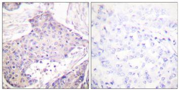 CARD6 Antibody (PA5-38098)