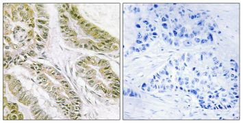 Bax Antibody (PA5-38933)