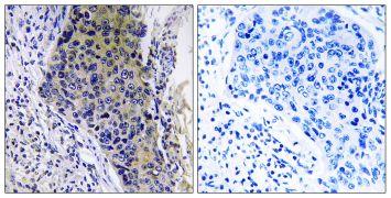MRPL34 Antibody (PA5-38963)