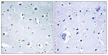 GCP3 Antibody (PA5-39181)