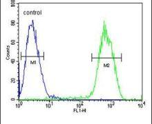 PCDHGC3 Antibody (PA5-23650)