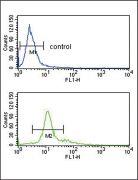 PCSK2 Antibody (PA5-14596)