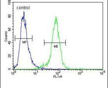 PDE12 Antibody (PA5-23793)