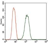 PDE1B Antibody (MA5-17147)