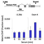 PDGFRA Antibody (710169)