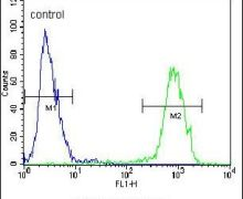 PENK Antibody (PA5-25783)