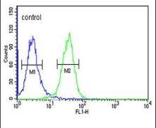 PGP Antibody (PA5-26852)