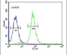 PHYH Antibody (PA5-26017)