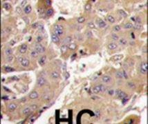 PIK3R3 Antibody (PA5-15263)