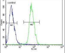 PLA2 Antibody (PA5-24805)