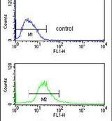 POLDIP2 Antibody (PA5-14612)