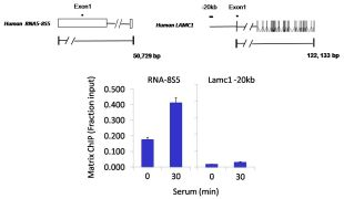 POLR1D Antibody (PA5-30575)