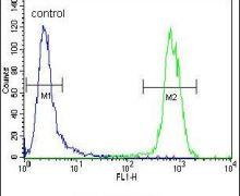 PON1 Antibody (PA5-24178)