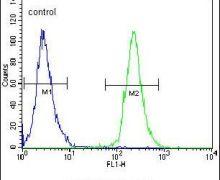POTEB Antibody (PA5-23543)