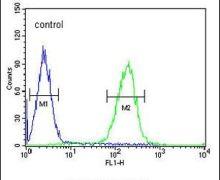 POTEE Antibody (PA5-23521)