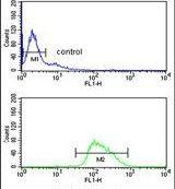 BOB-1 Antibody (PA5-26105)