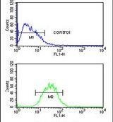 PR38A Antibody (PA5-26925)