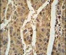 PRDX6 Antibody (PA5-24632)