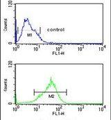 PRP19 Antibody (PA5-24797)