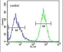 PRRG3 Antibody (PA5-24122)