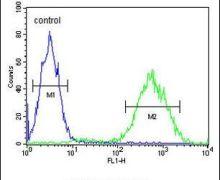 PRUNE Antibody (PA5-26752)