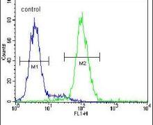 PSMD7 Antibody (PA5-24630)