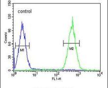 PURG Antibody (PA5-24115)