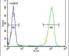 PEX2 Antibody (PA5-26187)