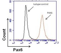 PAX6 Antibody (MA1-109)