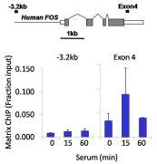 Phospho-p53 (Ser15) Antibody (700439)