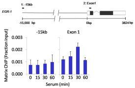 Phospho-RSK1 (Thr359, Ser363) Antibody (PA5-17901)