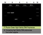 Robust amplification of DNA fragments regardless of GC content