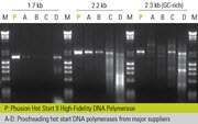 Phusion Hot Start II DNA Polymerase provides extreme specificity and abundant yields