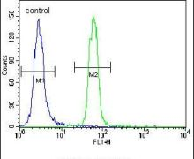 PSEN1 Antibody (PA5-13214)