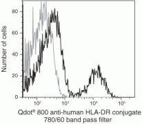 HLA-DR Antibody (Q10063)