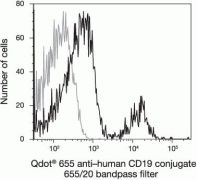 CD19 Antibody (Q10179)