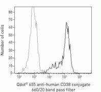 CD38 Antibody (Q22150)