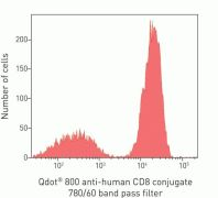 CD8 Antibody (Q22157)