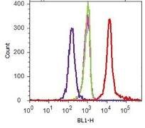 V5 Tag Antibody (R963-25)