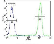 RABGAP1 Antibody (PA5-23962)
