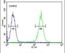 RAD26L Antibody (PA5-23676)