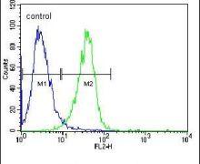 c-Raf Antibody (PA5-14941)