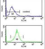 RFC3 Antibody (PA5-12486)