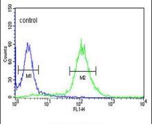 RFC5 Antibody (PA5-12418)
