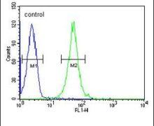 RGR Antibody (PA5-26892)