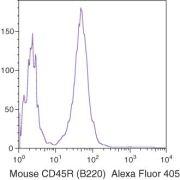 CD45R Antibody (RM2626)
