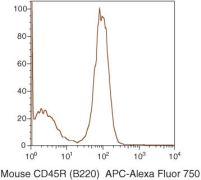 CD45R Antibody (RM2627)
