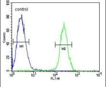 RNF8 Antibody (PA5-26820)