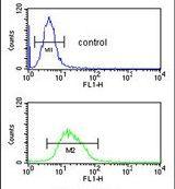 RNaseH2C Antibody (PA5-26311)