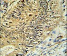 RPS15A Antibody (PA5-24733)
